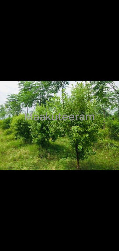 Residential Farm Land for sale in JP Darga Hyderabad